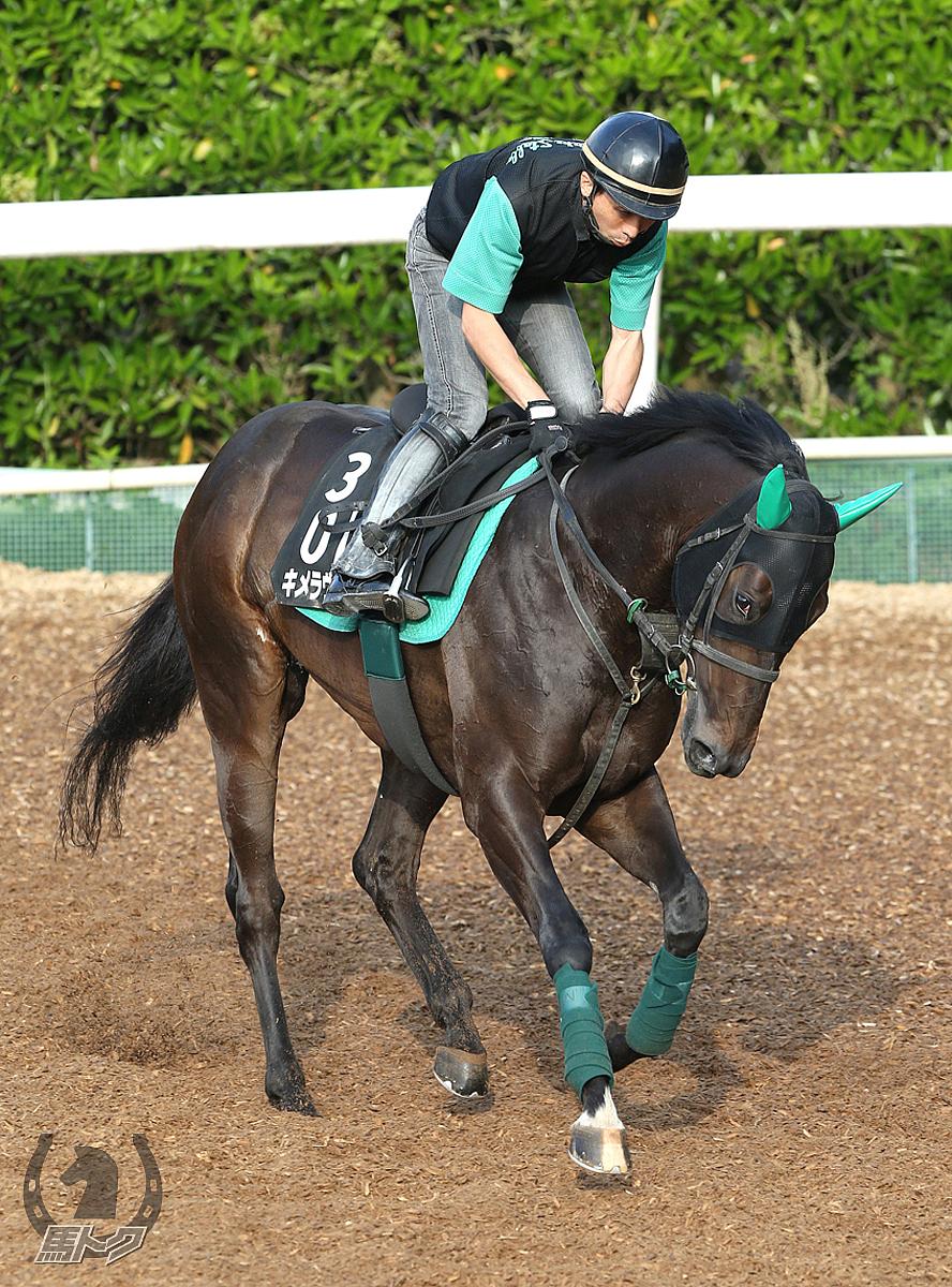 キメラヴェリテの馬体写真