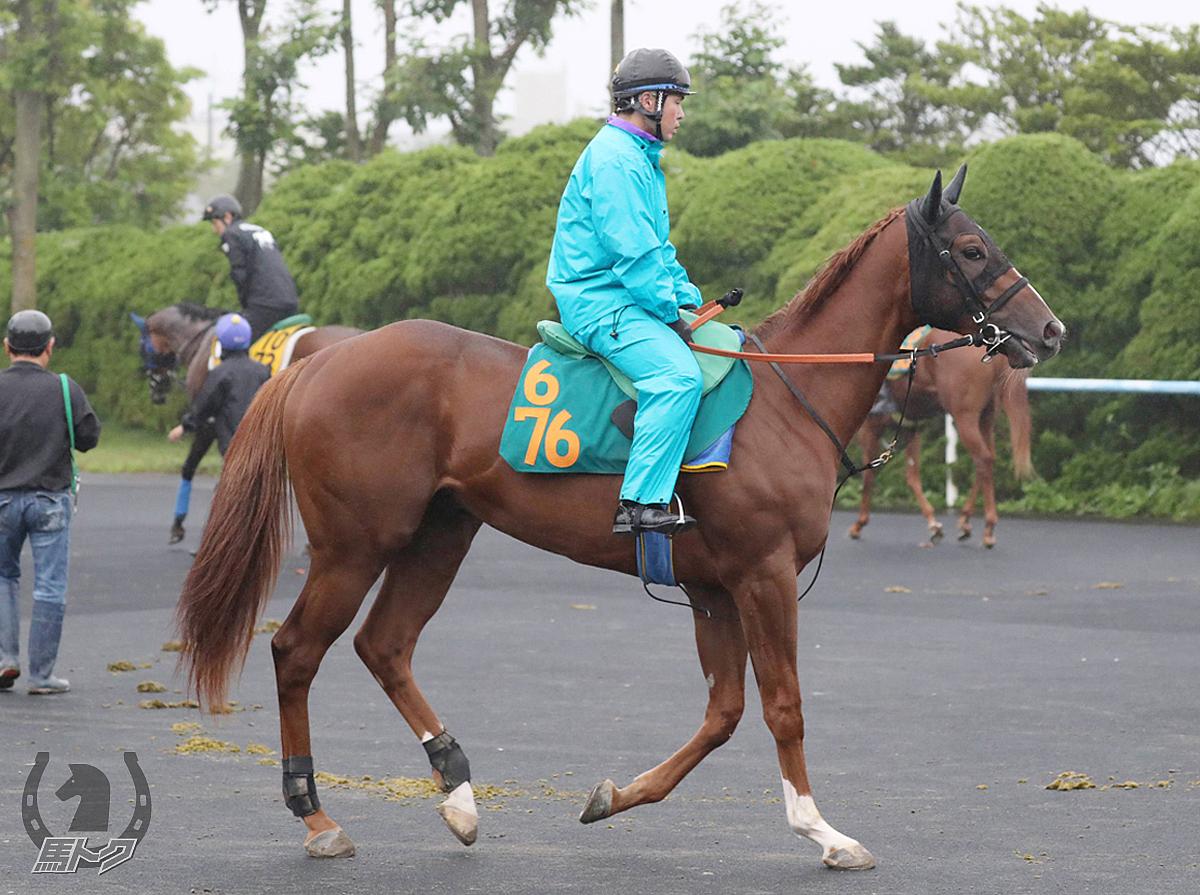 ゴッドスターの馬体写真