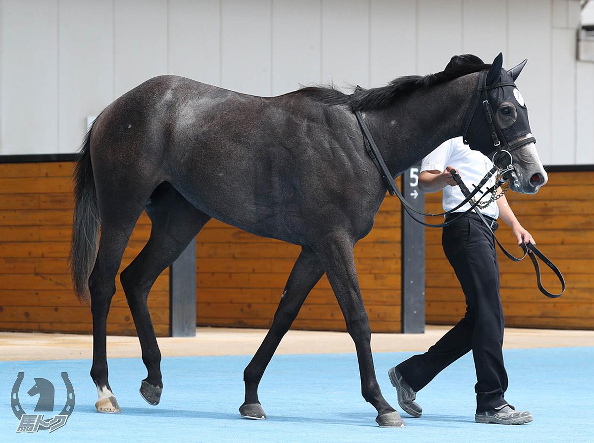 マンバーの馬体写真