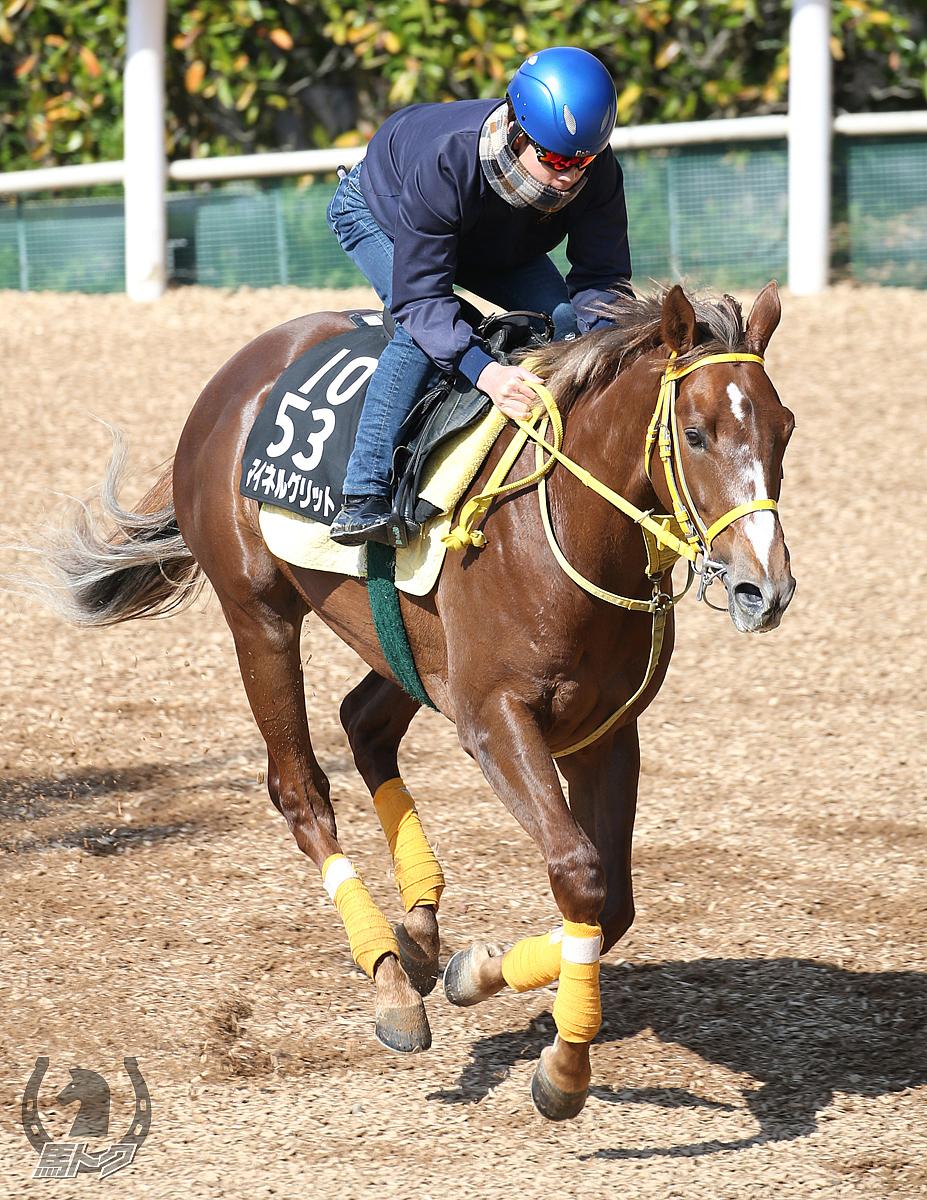 マイネルグリットの馬体写真