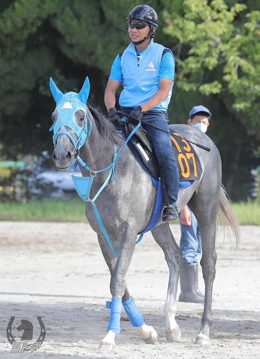マイネルソラスの馬体写真