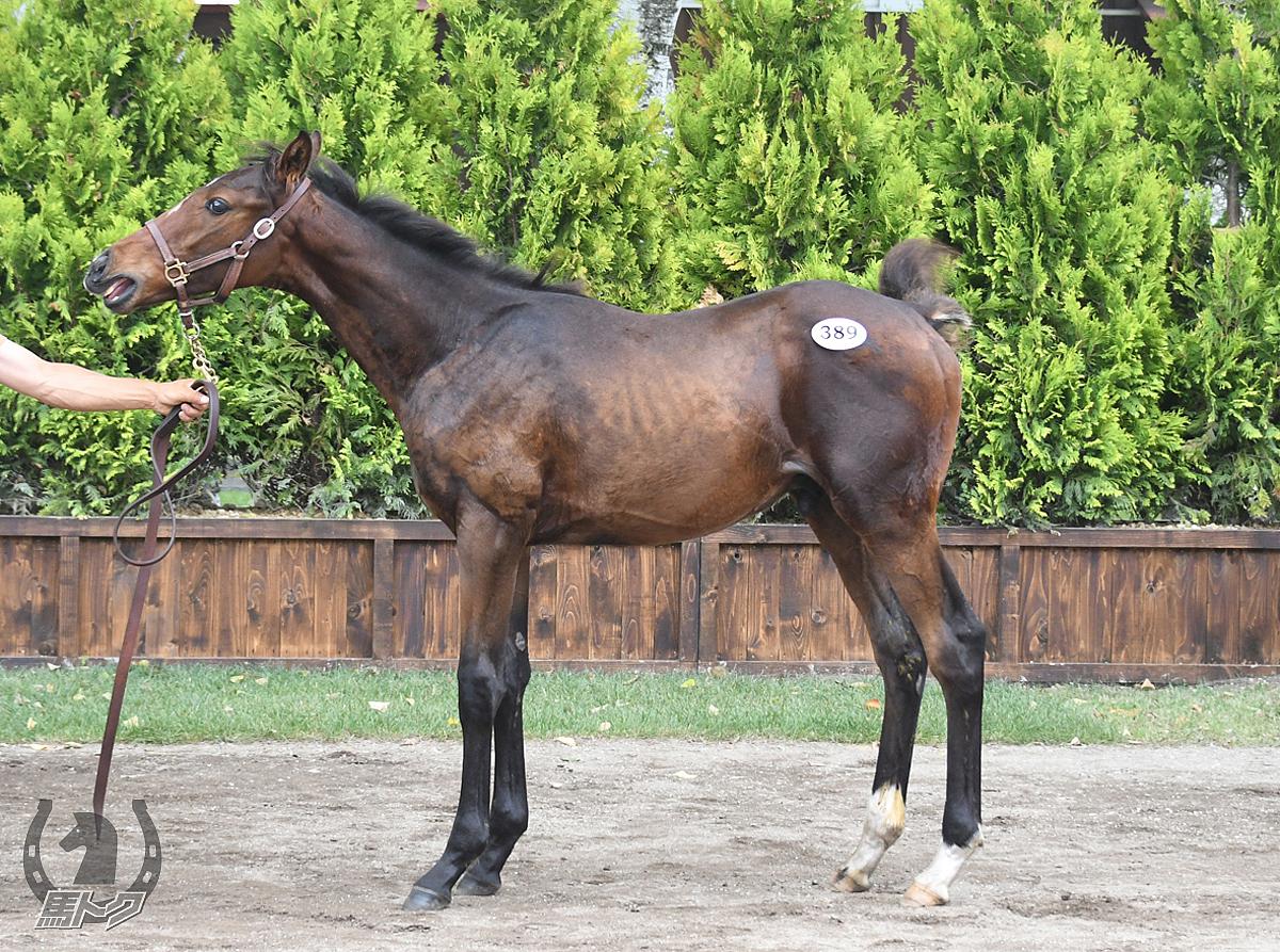 ムーンベイビーの馬体写真