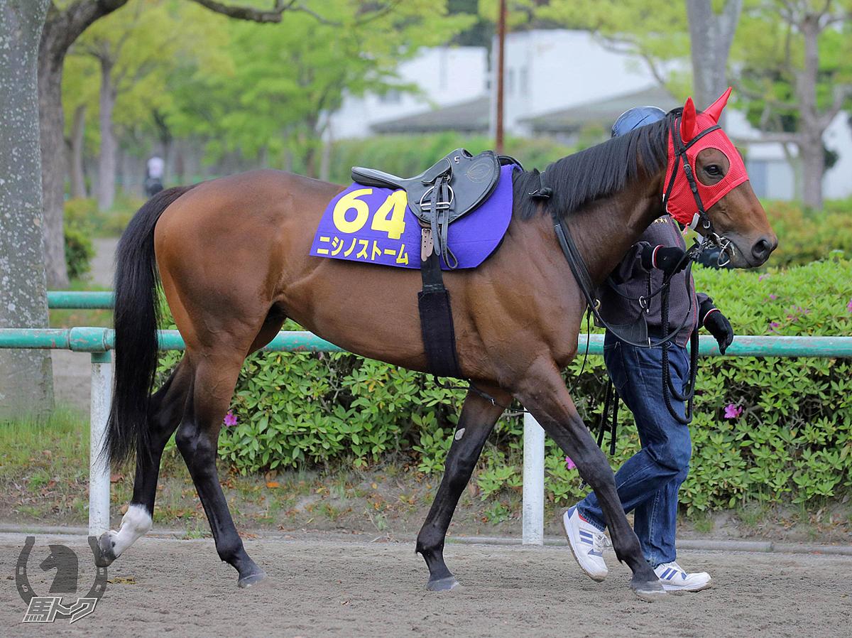ニシノストームの馬体写真