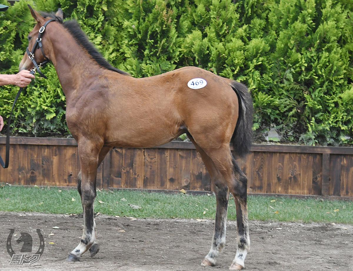 フィアレススマイルの馬体写真