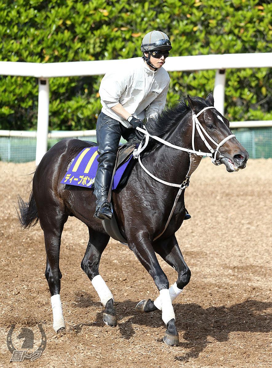 ディープボンドの馬体写真
