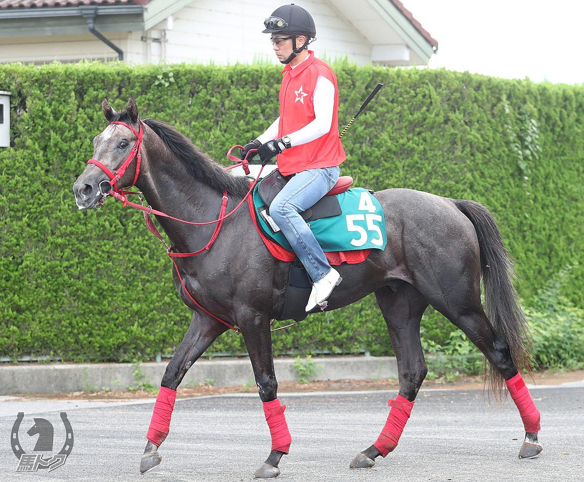 セツメンノトビウオの馬体写真