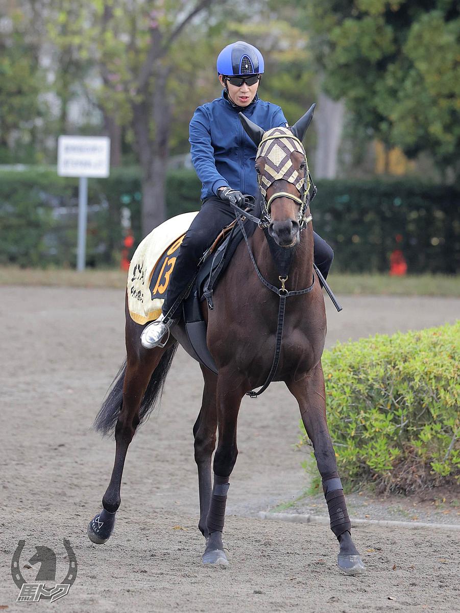 ショウナンハレルヤの馬体写真
