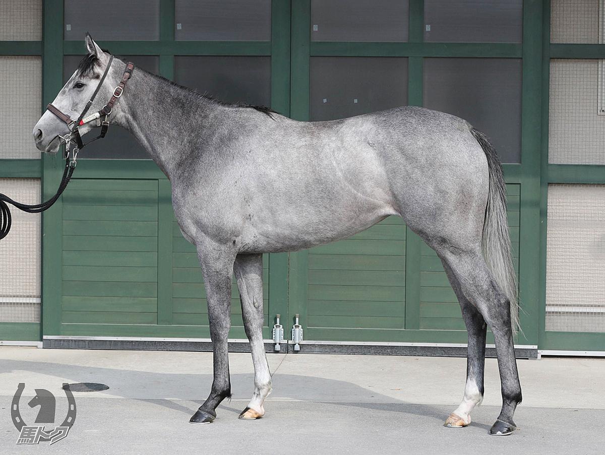 スマイルカナの馬体写真