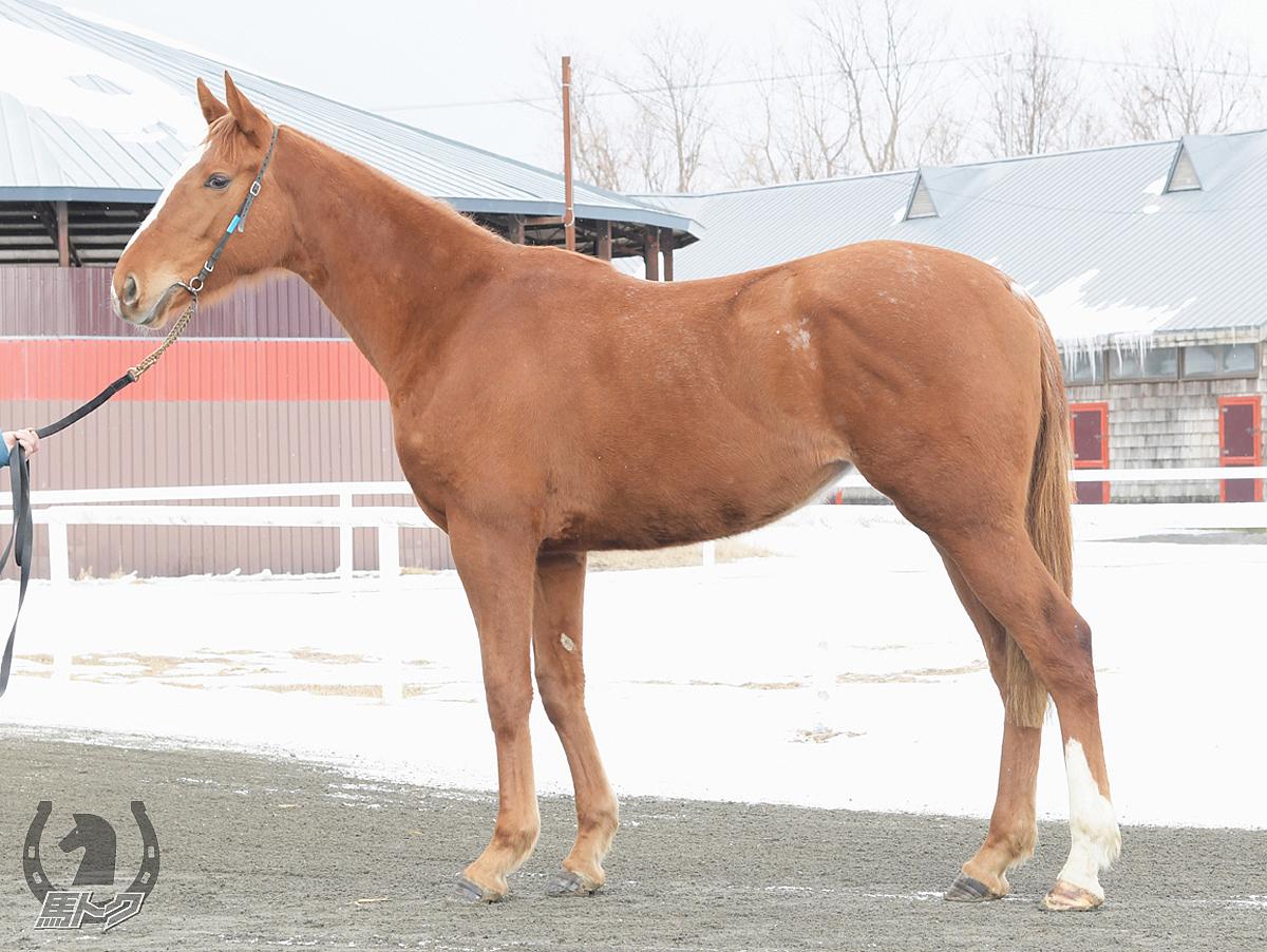 スマイルフェイスの馬体写真