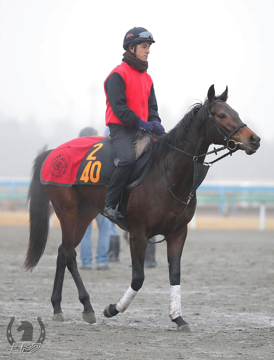 カインドリーの馬体写真