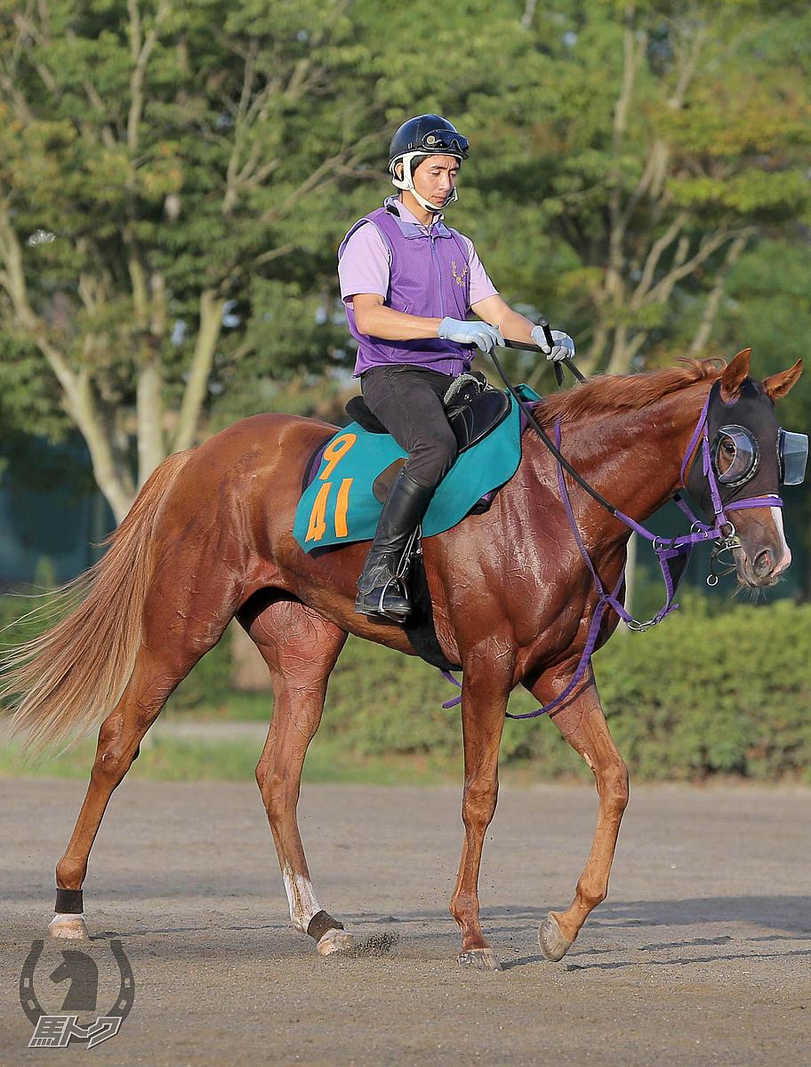 グライユルの馬体写真