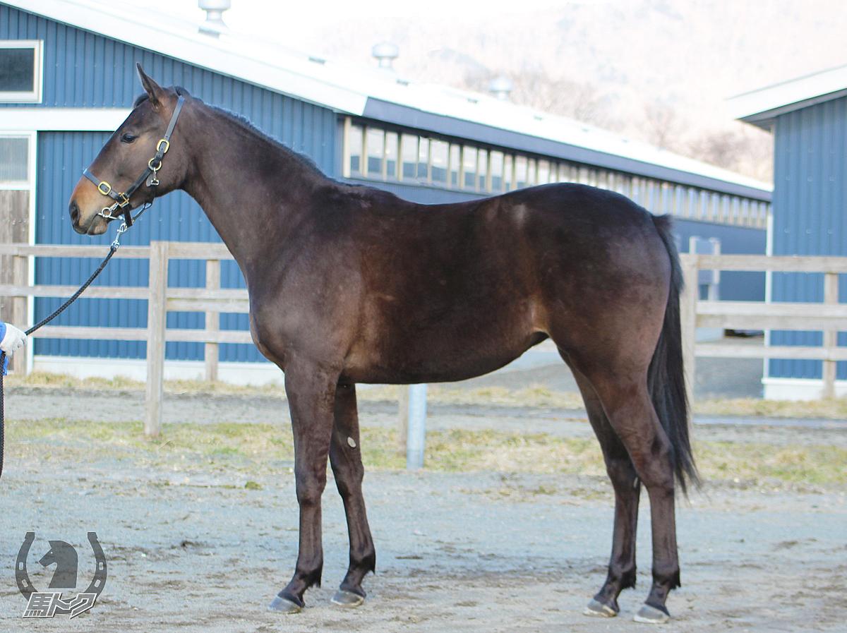 ロジーナの馬体写真