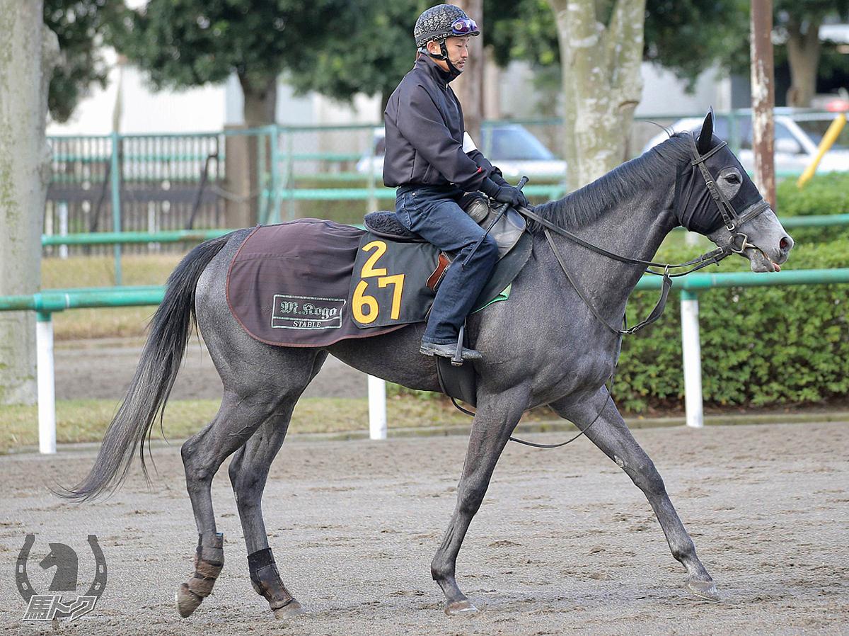 カフェサンドリヨンの馬体写真