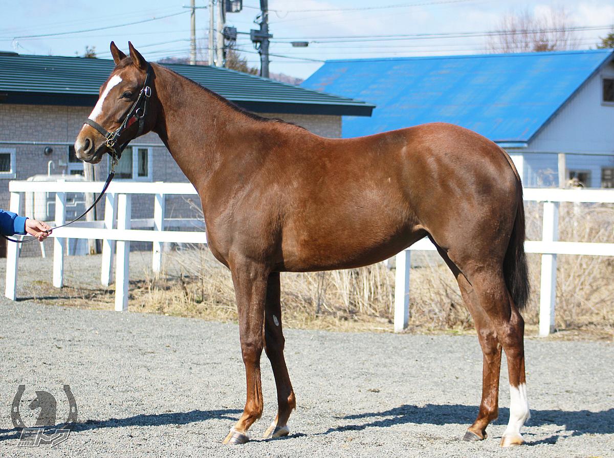 ルージュカプリスの馬体写真