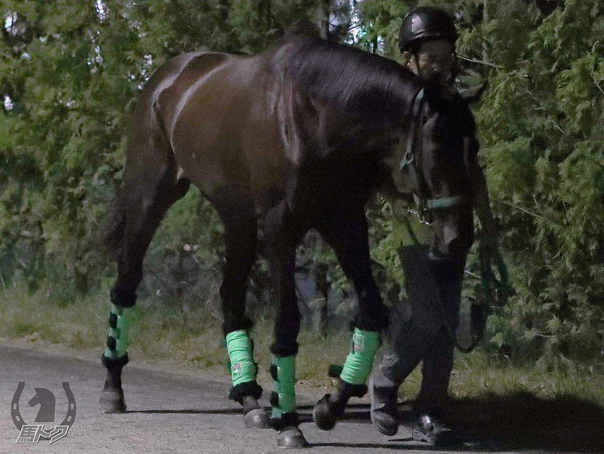 クリアサウンドの馬体写真