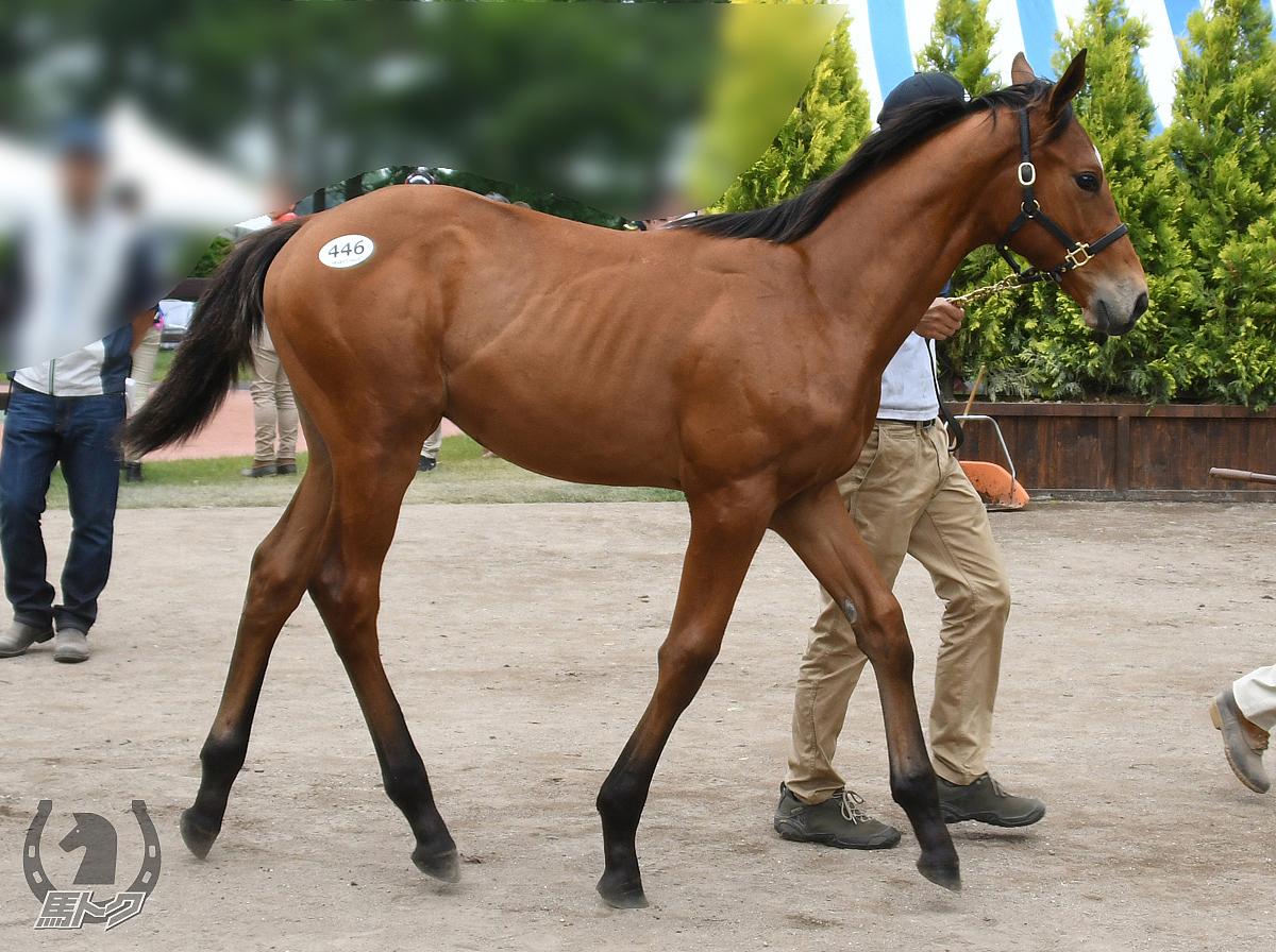 ヘラクレスバローズの馬体写真