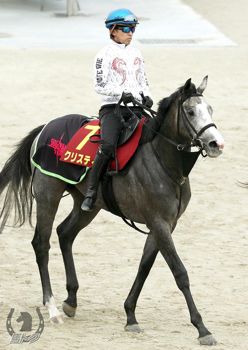 クリスティの馬体写真