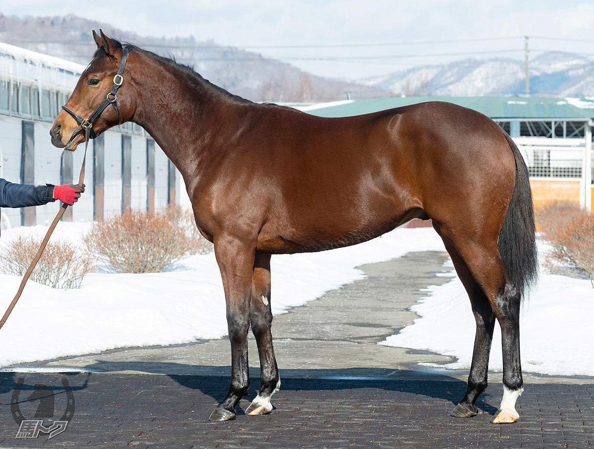 ブラングライクの馬体写真