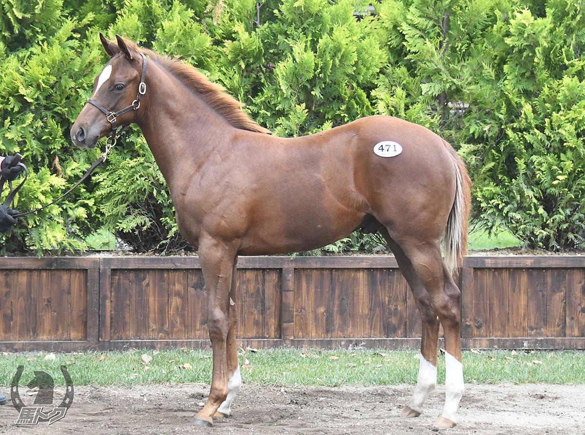 ニルカンタテソーロの馬体写真