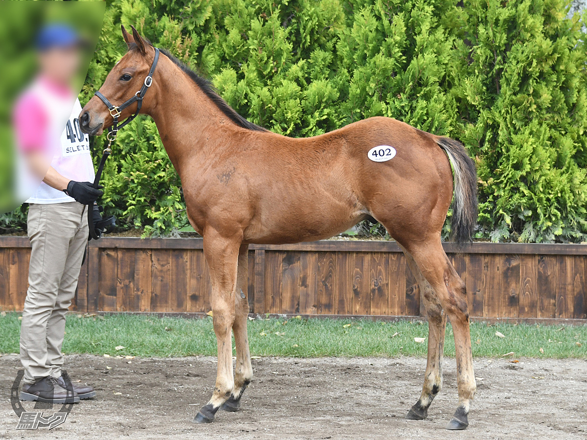 マルタクロスの馬体写真