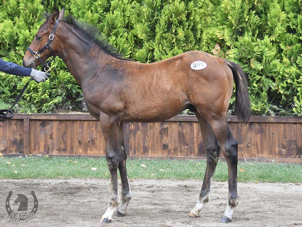 カレンシュトラウスの馬体写真