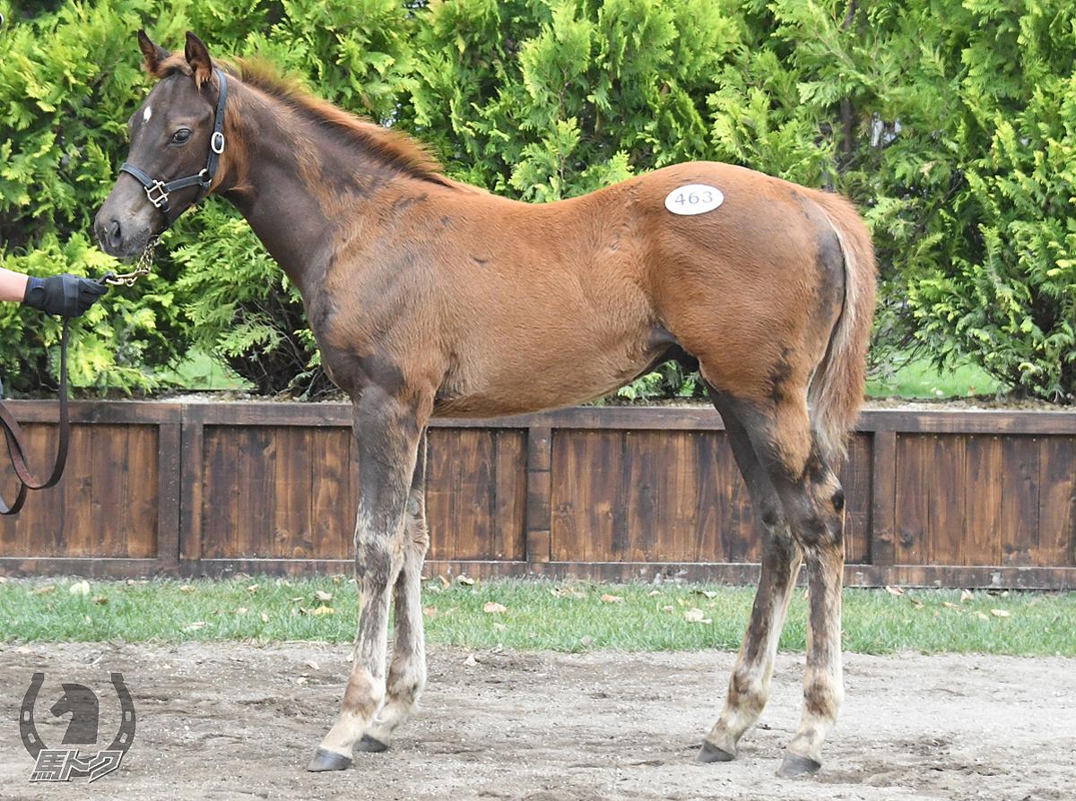 トモジャブルーノの馬体写真