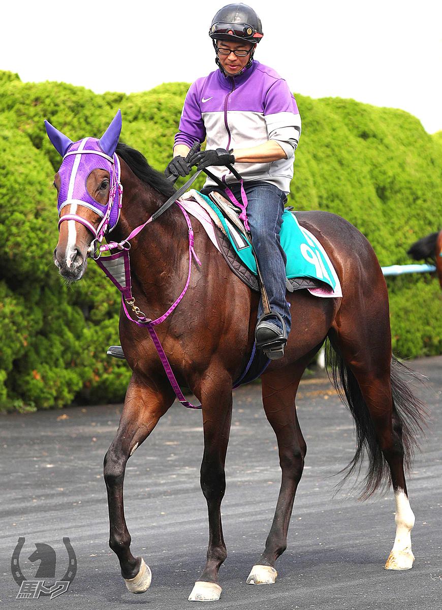 メイショウナパワンの馬体写真