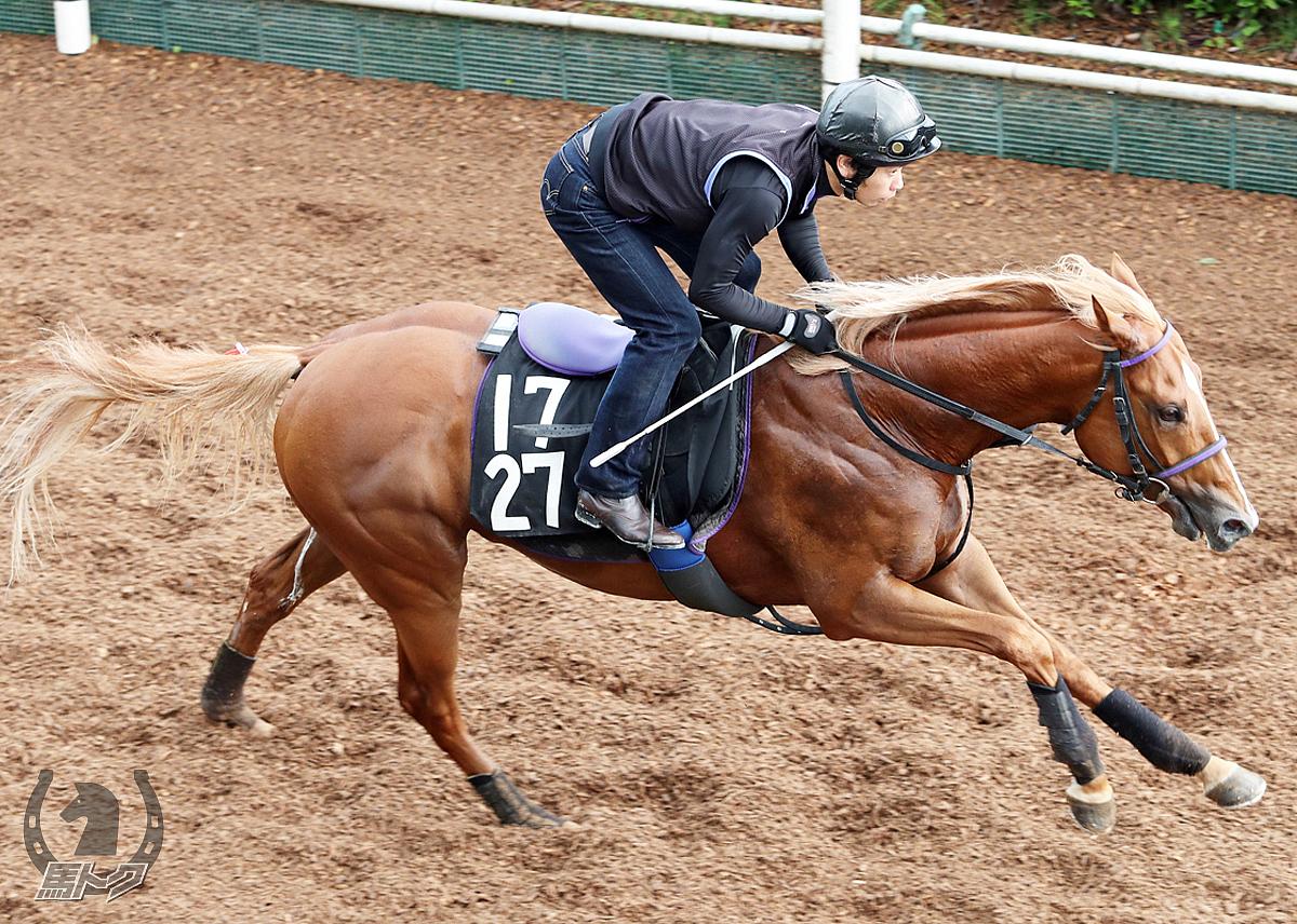 バビットの馬体写真