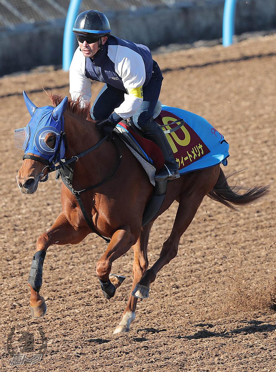 スウィートメリナの馬体写真