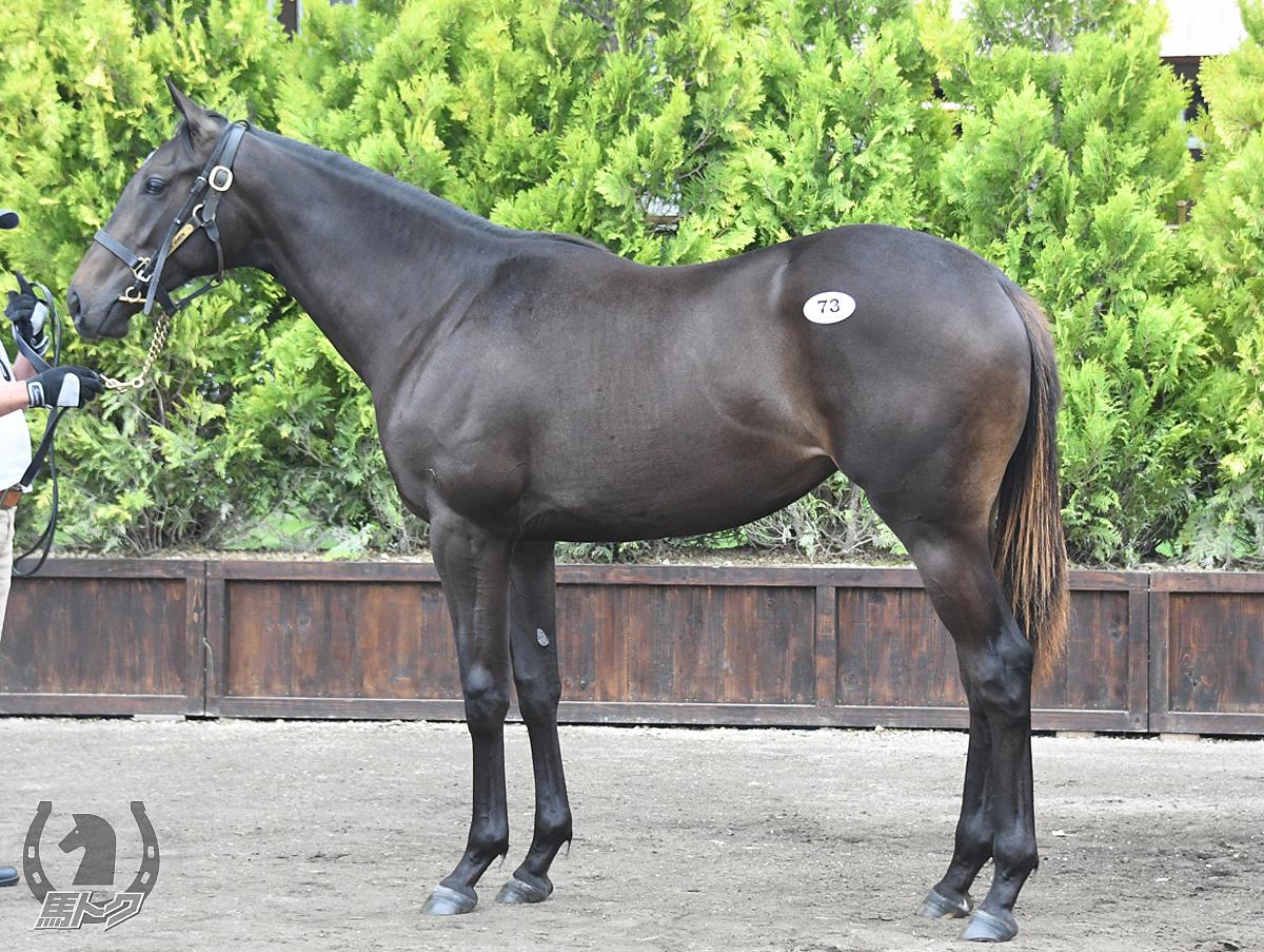 ダンツシルビアの馬体写真