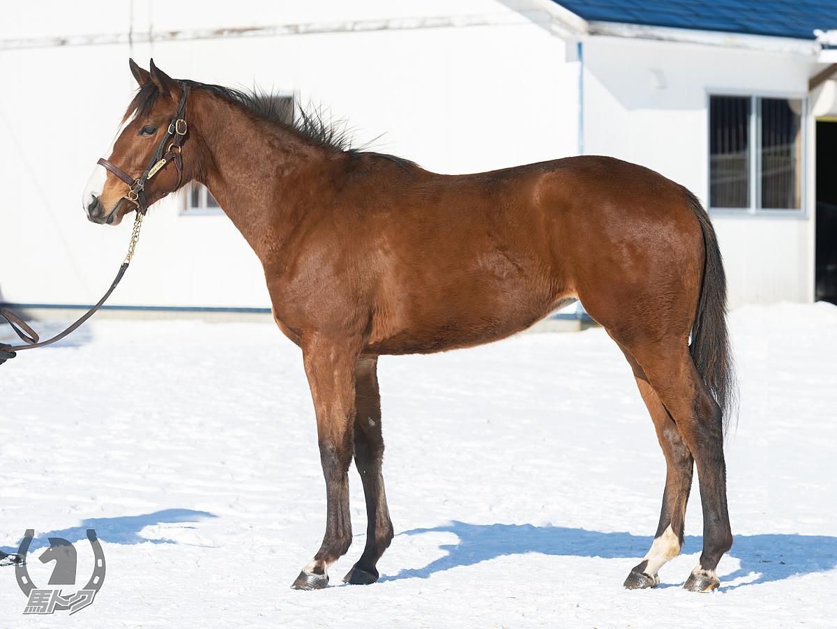 ショウゲッコウの馬体写真