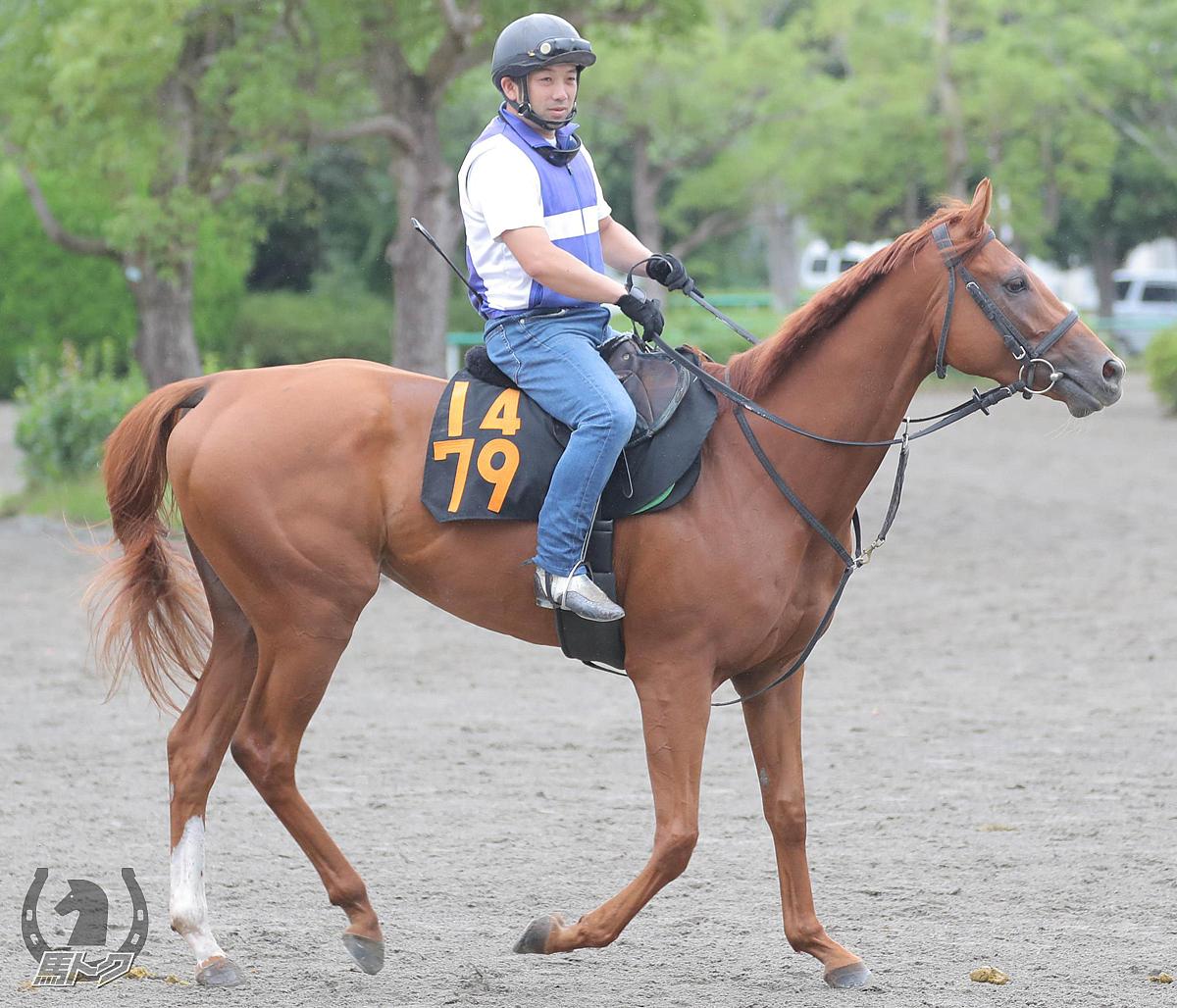 ラブリーエンジェルの馬体写真
