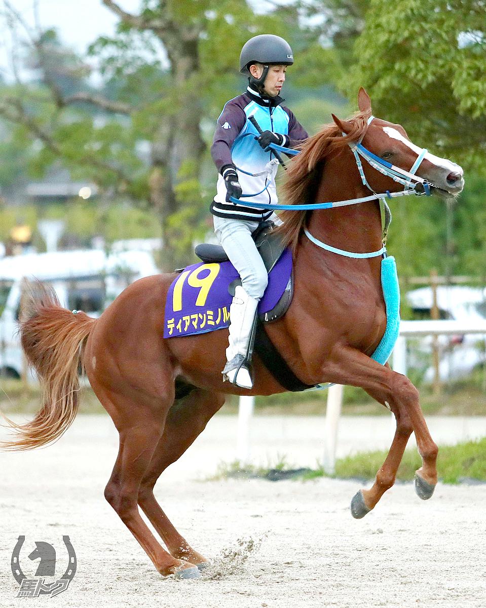 ディアマンミノルの馬体写真