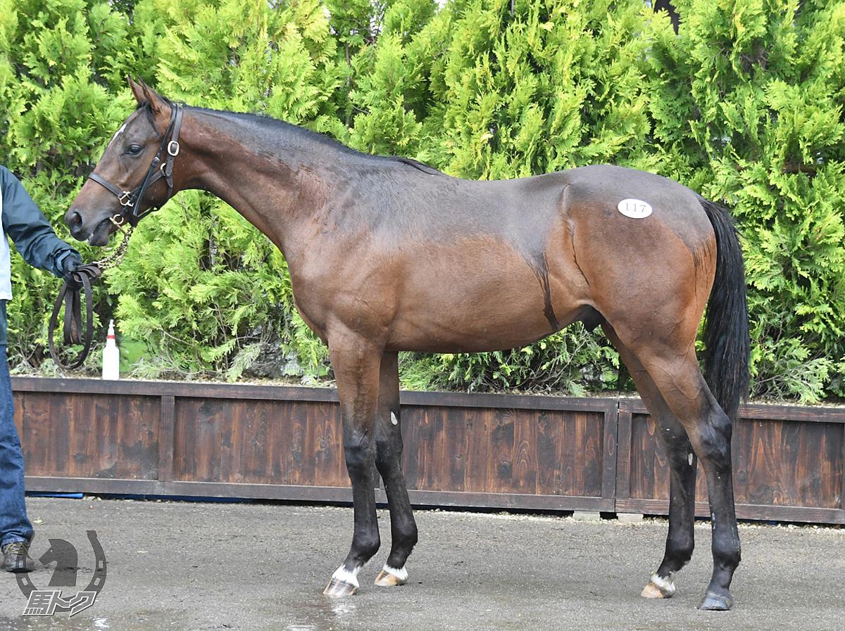 ハギノアレグリアスの馬体写真