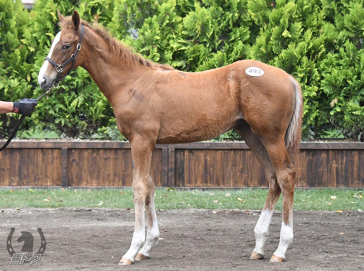 ブライトマイスターの馬体写真