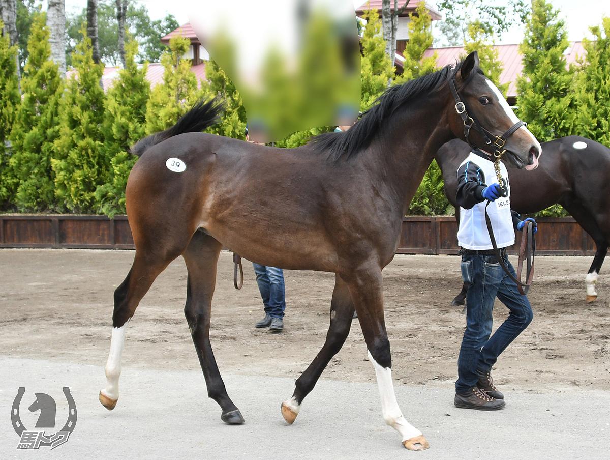 ウィルビーハッピーの馬体写真