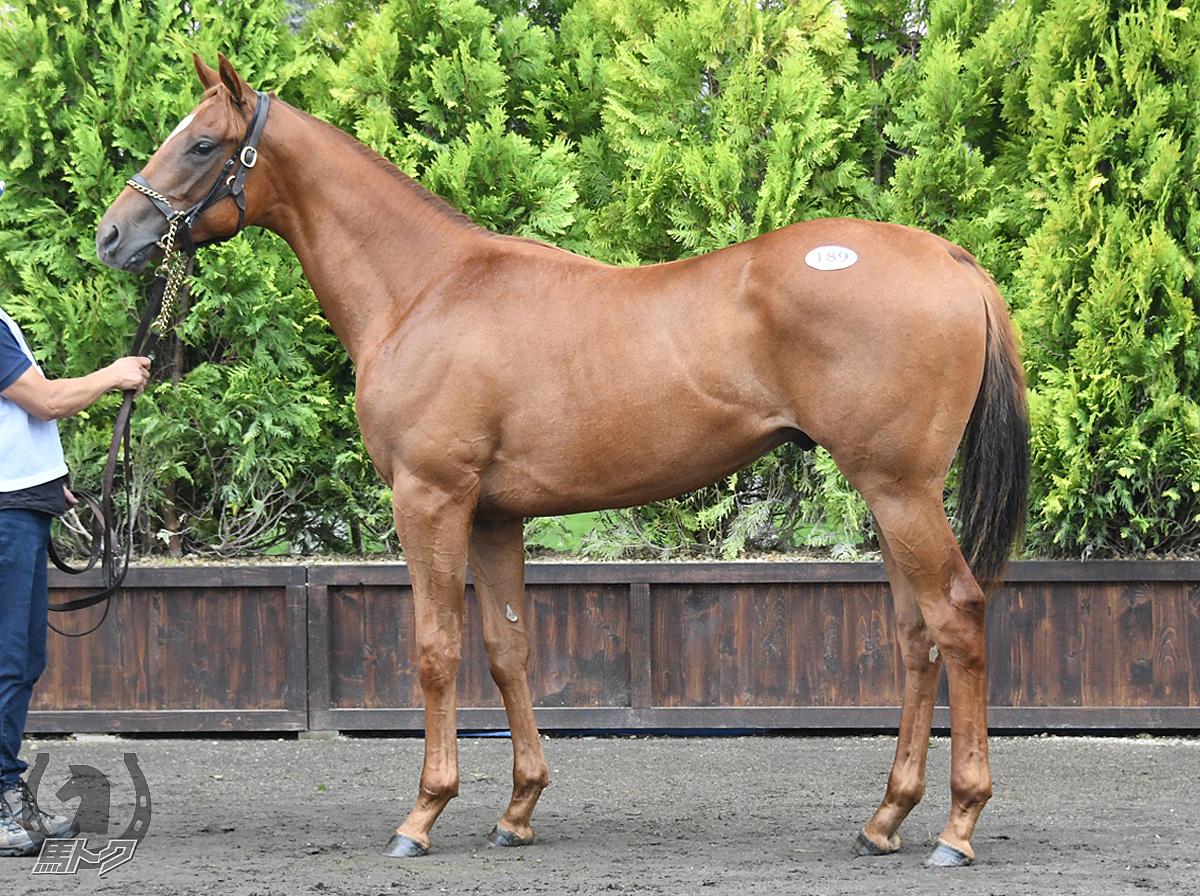 カッチョカバロの馬体写真