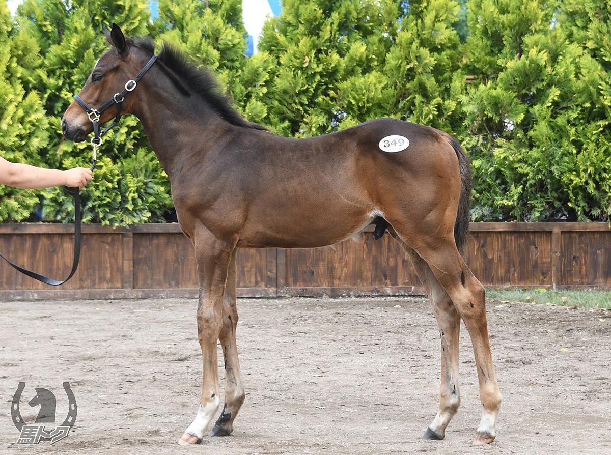 ウインアポロンの馬体写真