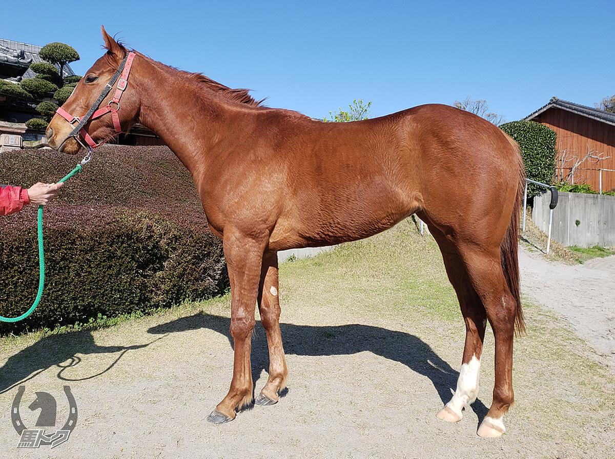 フルールドネージュの馬体写真