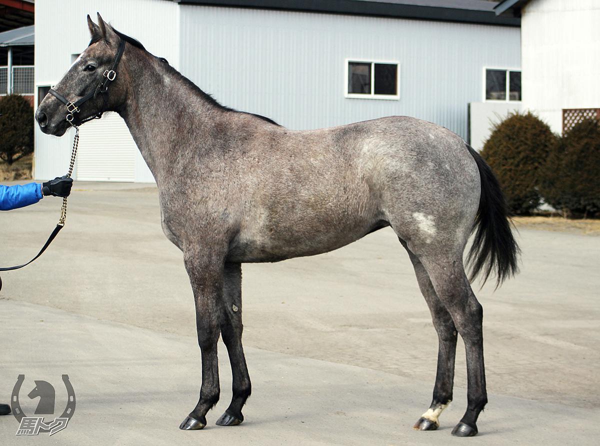 マリアネージュの馬体写真