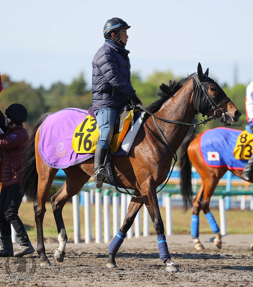 パラスアテナの馬体写真