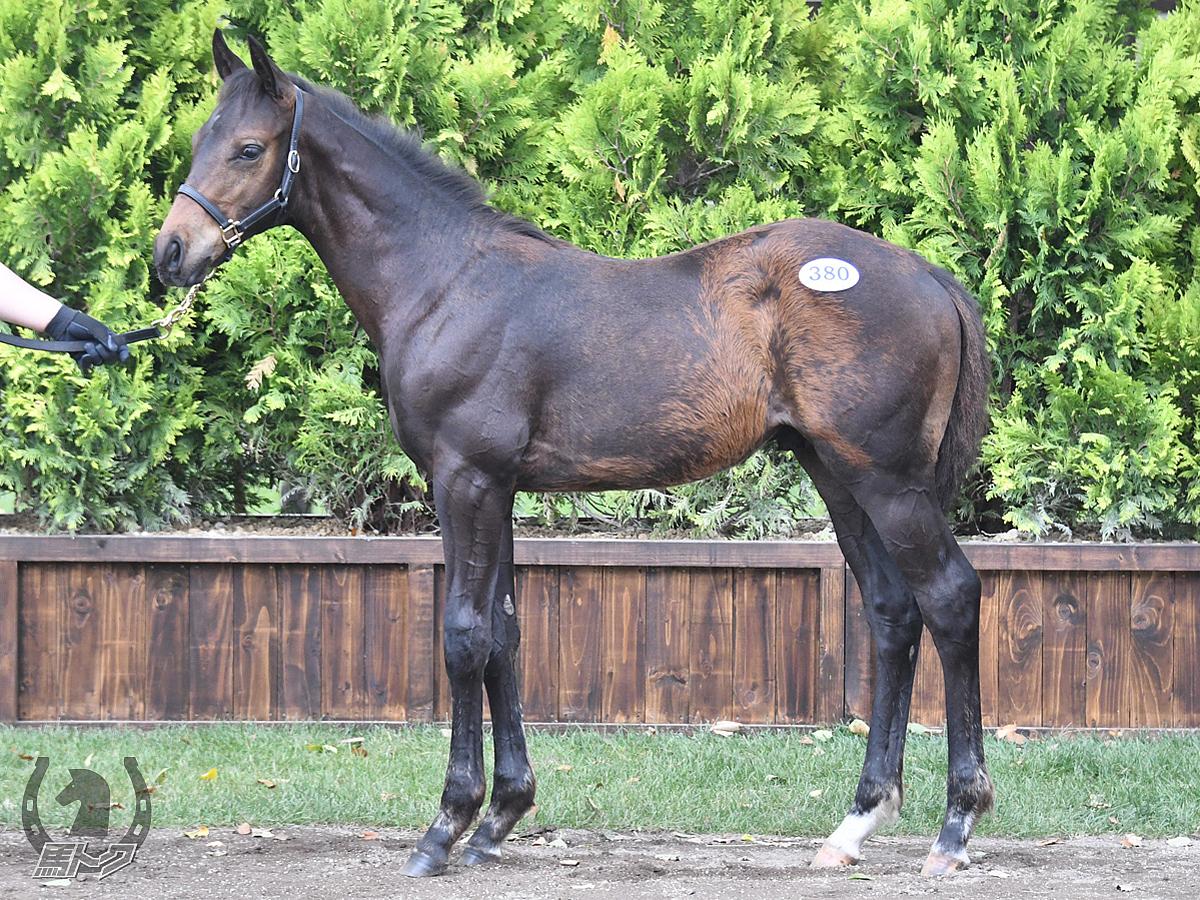 ミツカネエースの馬体写真