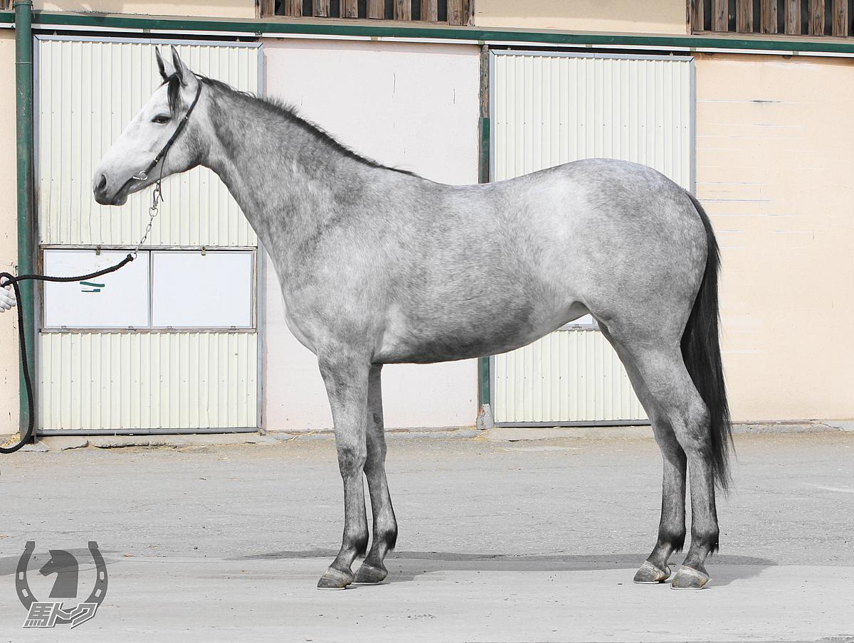 スノーレイズの馬体写真