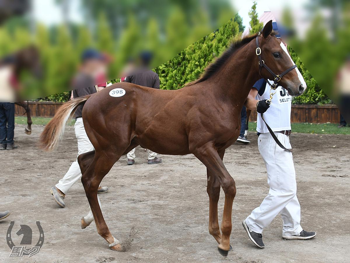 ワイドソロモンの馬体写真