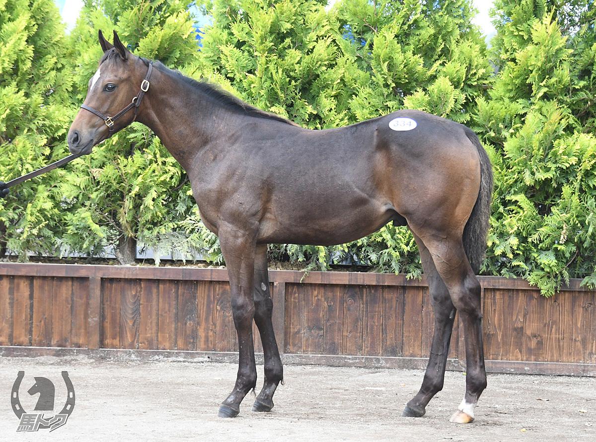 バウンティハンターの馬体写真