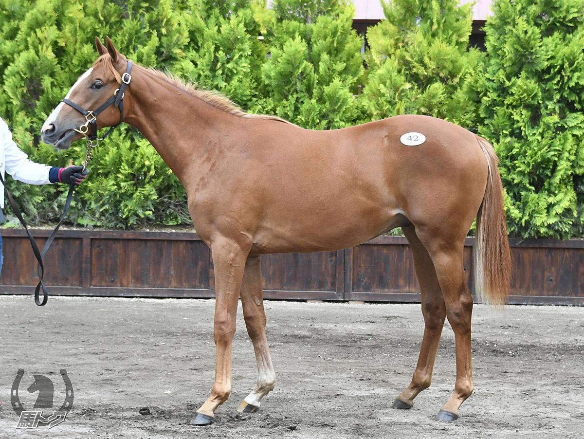 パワポケプリメーロの馬体写真