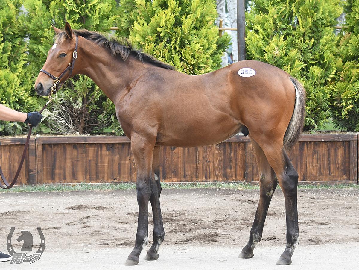 ヴォルストの馬体写真