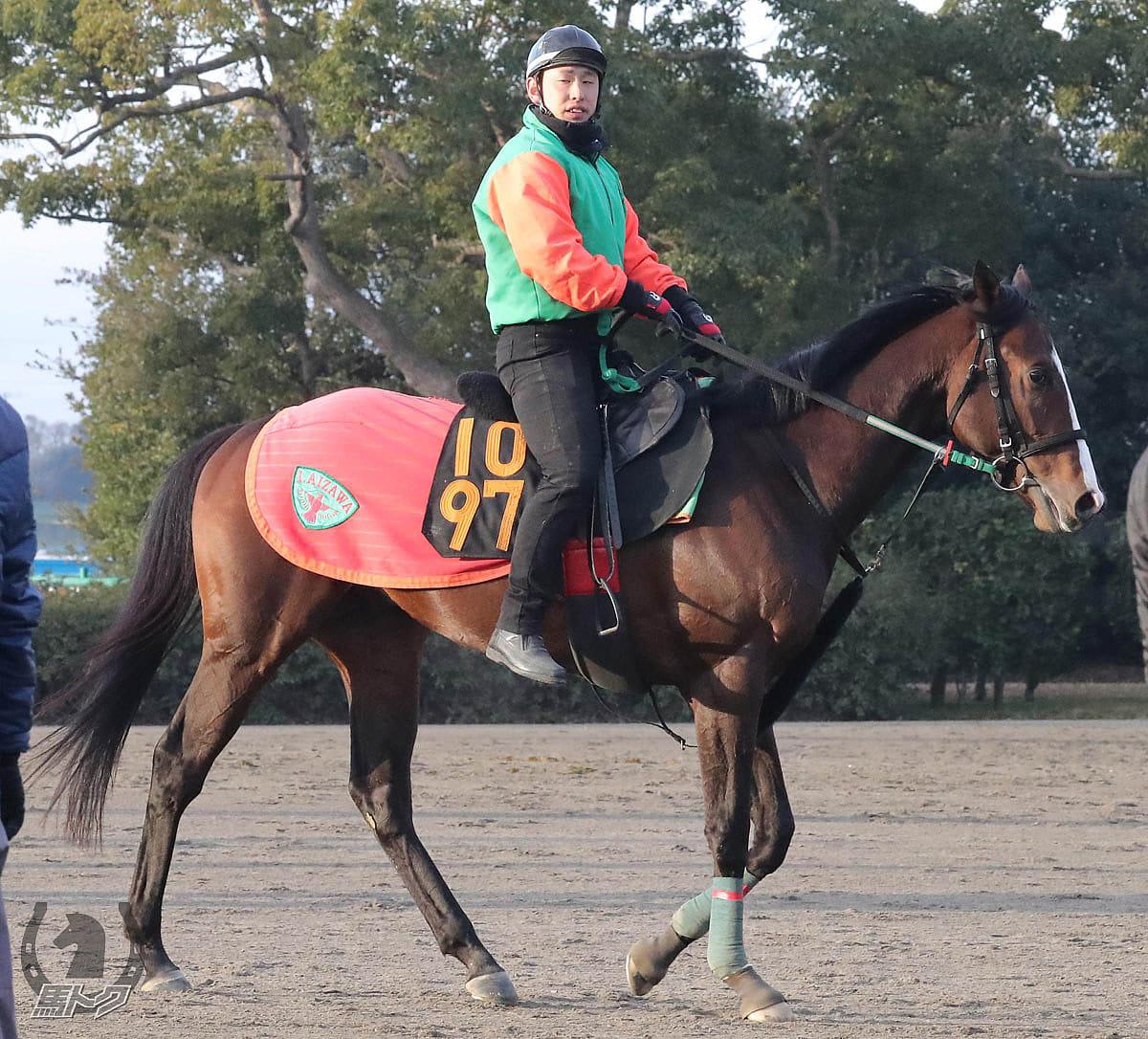 ビターエンダーの馬体写真