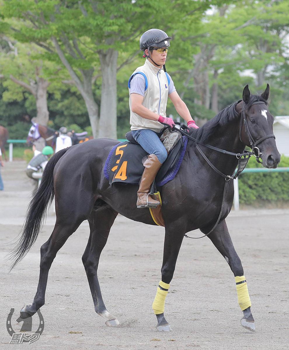 サンダーブリッツの馬体写真
