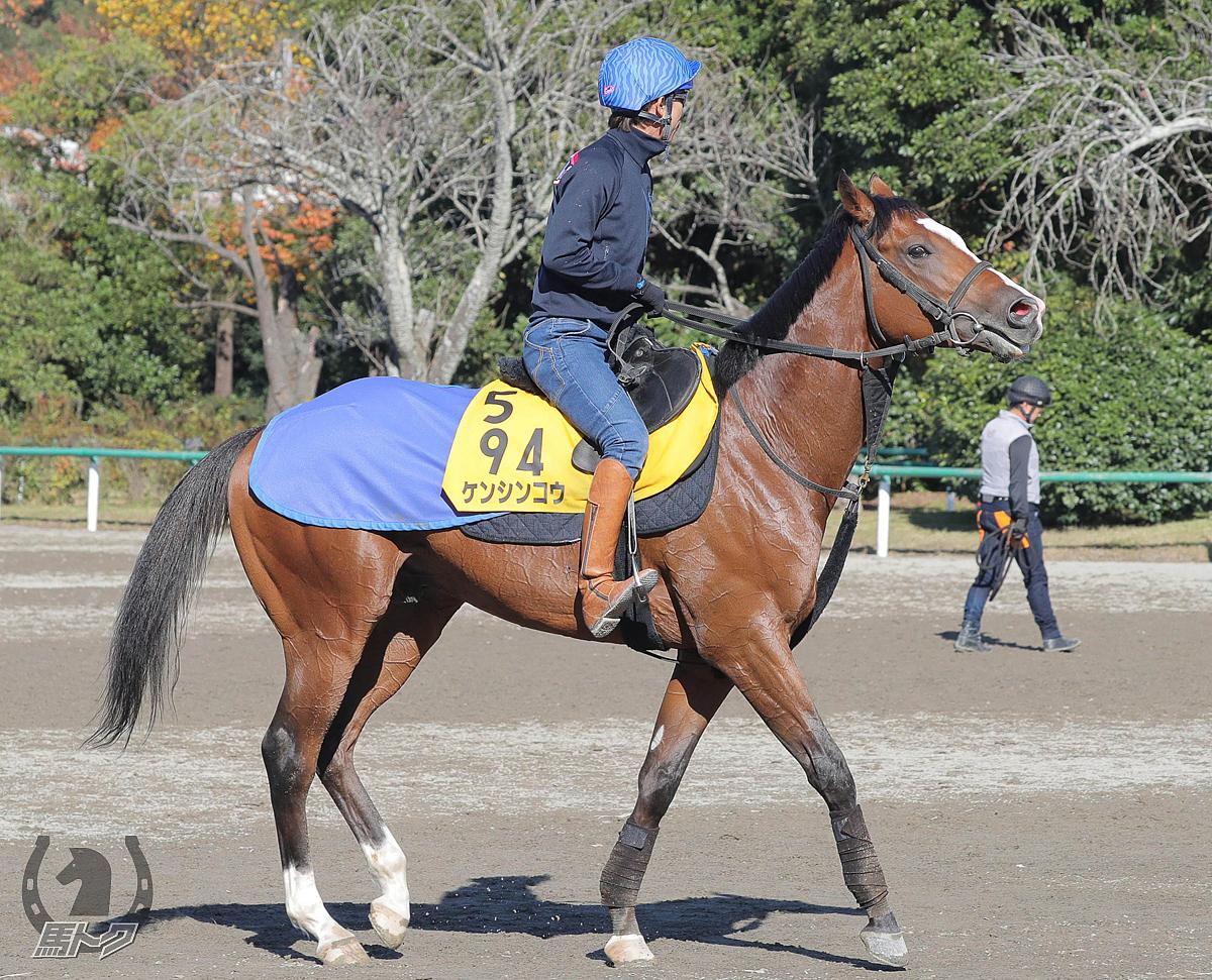 ケンシンコウの馬体写真